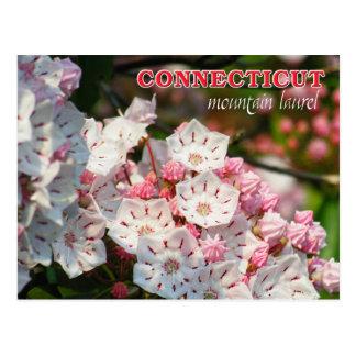 Flor de estado de Connecticut: Laurel de montaña Tarjetas Postales