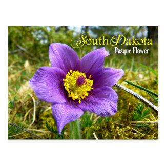 Flor de estado de Dakota del Sur: Flor de Pasque Postal