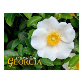 Flor de estado de Georgia: Rosa cherokee Tarjetas Postales