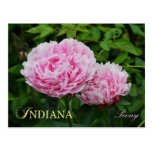 Flor de estado de Indiana: Peony Tarjeta Postal