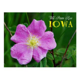 Flor de estado de Iowa: Pradera salvaje subió Tarjetas Postales