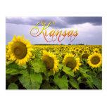 Flor de estado de Kansas - el girasol Postal