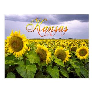 Flor de estado de Kansas - el girasol Tarjetas Postales