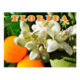 Flor de estado de la Florida: El flor anaranjado Postal