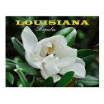 Flor de estado de Luisiana: Magnolia Postales