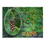Flor de estado de Maine: Cono y borla de White Postales