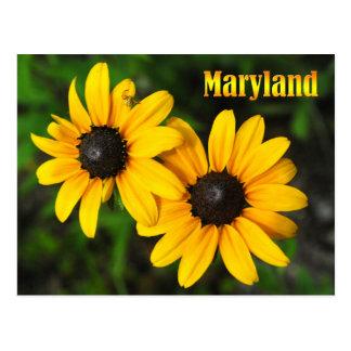 Flor de estado de Maryland: Susan Negro-observada Tarjetas Postales