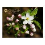 Flor de estado de Michigan: Apple florece Postales