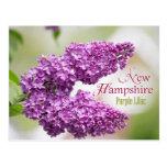 Flor de estado de New Hampshire: Lila púrpura Tarjetas Postales