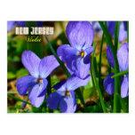 Flor de estado de New Jersey: Violeta Tarjeta Postal