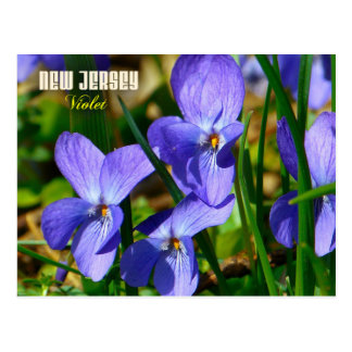 Flor de estado de New Jersey: Violeta Postal