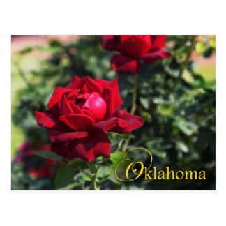 Flor de estado de Oklahoma: Oklahoma subió Tarjeta Postal