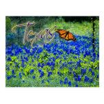 Flor de estado de Tejas - Bluebonnets Tarjeta Postal