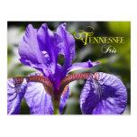 Flor de estado de Tennessee: Iris Tarjetas Postales