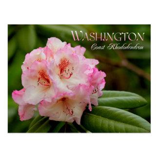 Flor de estado de Washington: Rododendro de costa Tarjeta Postal