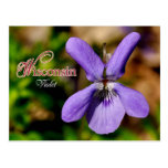 Flor de estado de Wisconsin: Violeta Tarjetas Postales