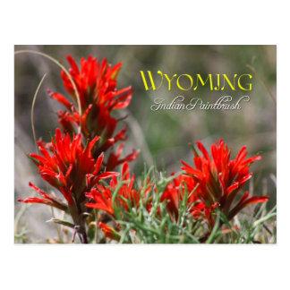 Flor de estado de Wyoming: Brocha india Tarjeta Postal