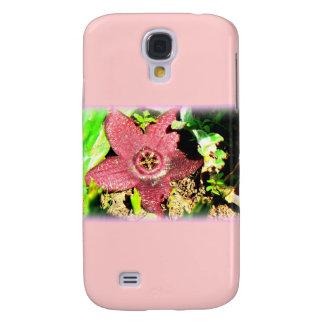 Flor de estrellas de mar - cactus púrpura/flor suc