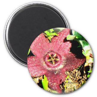 Flor de estrellas de mar - cactus púrpura/flor suc imanes para frigoríficos