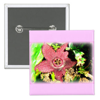 Flor de estrellas de mar - cactus púrpura/flor suc pin cuadrado