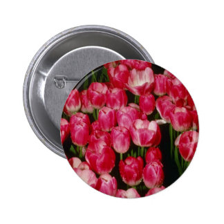 "Flor de Gesneriana de Tulipa ""Coriolor"" (tulipán) Pins"