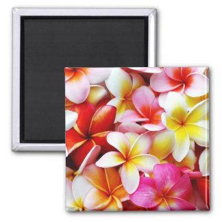 Flor de Hawaii del Frangipani del Plumeria modific Imán Cuadrado
