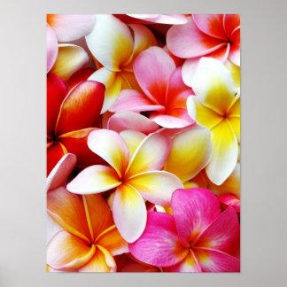 Flor de Hawaii del Frangipani del Plumeria modific Póster