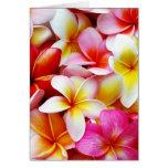 Flor de Hawaii del Frangipani del Plumeria modific Tarjetas