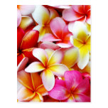 Flor de Hawaii del Frangipani del Plumeria modific Tarjetas Postales
