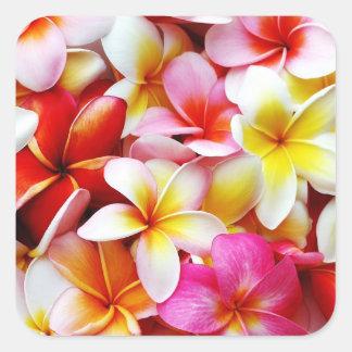 Flor de Hawaii del Frangipani del Plumeria Pegatina Cuadrada
