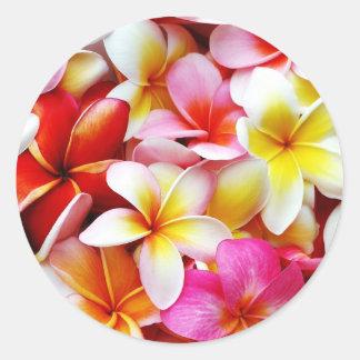 Flor de Hawaii del Frangipani del Plumeria Pegatina Redonda