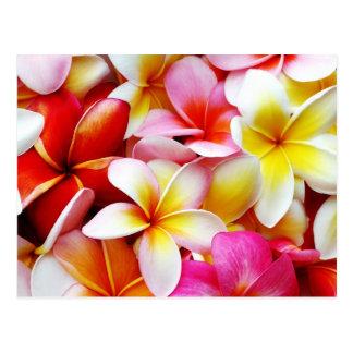Flor de Hawaii del Frangipani del Plumeria Tarjeta Postal