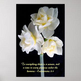 Flor de Jonquil - 3:1 de Ecclesiastes Póster