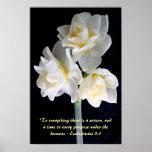 Flor de Jonquil - 3:1 de Ecclesiastes Posters