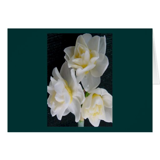 Flor de Jonquil - 3:1 de Ecclesiastes Tarjeta De Felicitación
