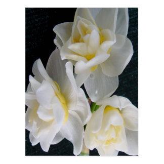 Flor de Jonquil - 3:1 de Ecclesiastes Tarjeta Postal