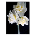 Flor de Jonquil - tarjeta de la zona del 3:1 de Tarjetas De Visita Grandes