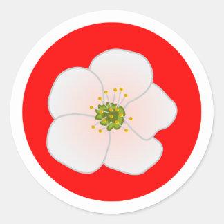 Flor de kirsch cherry blossom