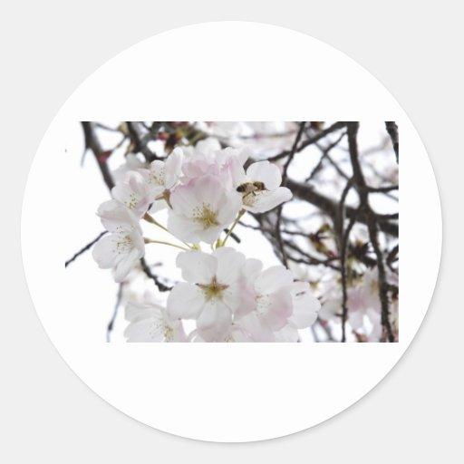 flor de la abeja etiquetas redondas