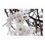flor de la abeja tarjetas postales