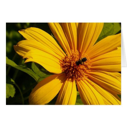 Flor de la abeja tarjetón
