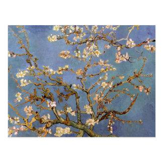 Flor de la almendra de Van Gogh Tarjeta Postal