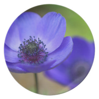 Flor de la amapola azul plato de cena