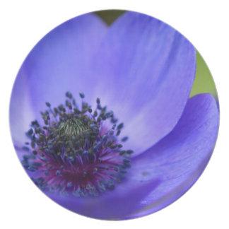 Flor de la amapola azul platos para fiestas