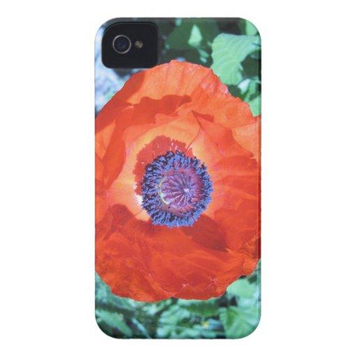 Flor de la amapola iPhone 4 Case-Mate coberturas