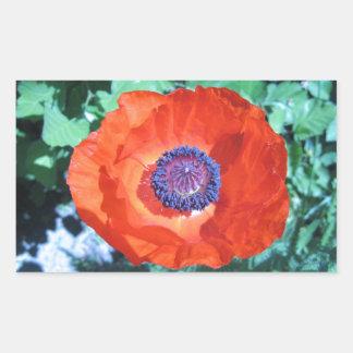 Flor de la amapola pegatina rectangular