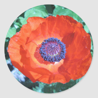 Flor de la amapola pegatina redonda