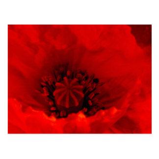 Flor de la amapola tarjetas postales