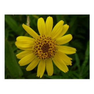 Flor de la árnica, isla de Unalaska Postal