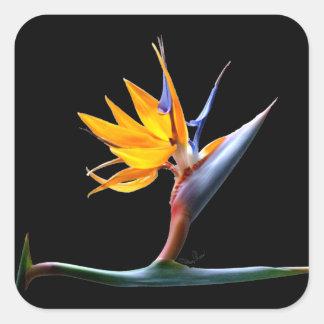 Flor de la ave del paraíso pegatina cuadrada